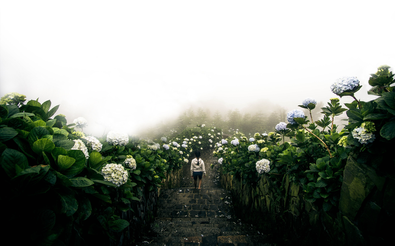 수국 꽃길