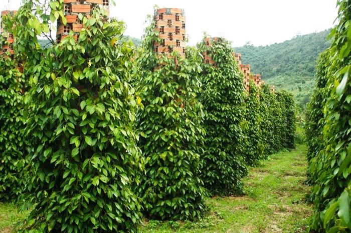 푸꾸옥 북부 탐방 - 카약과 락벰 마을